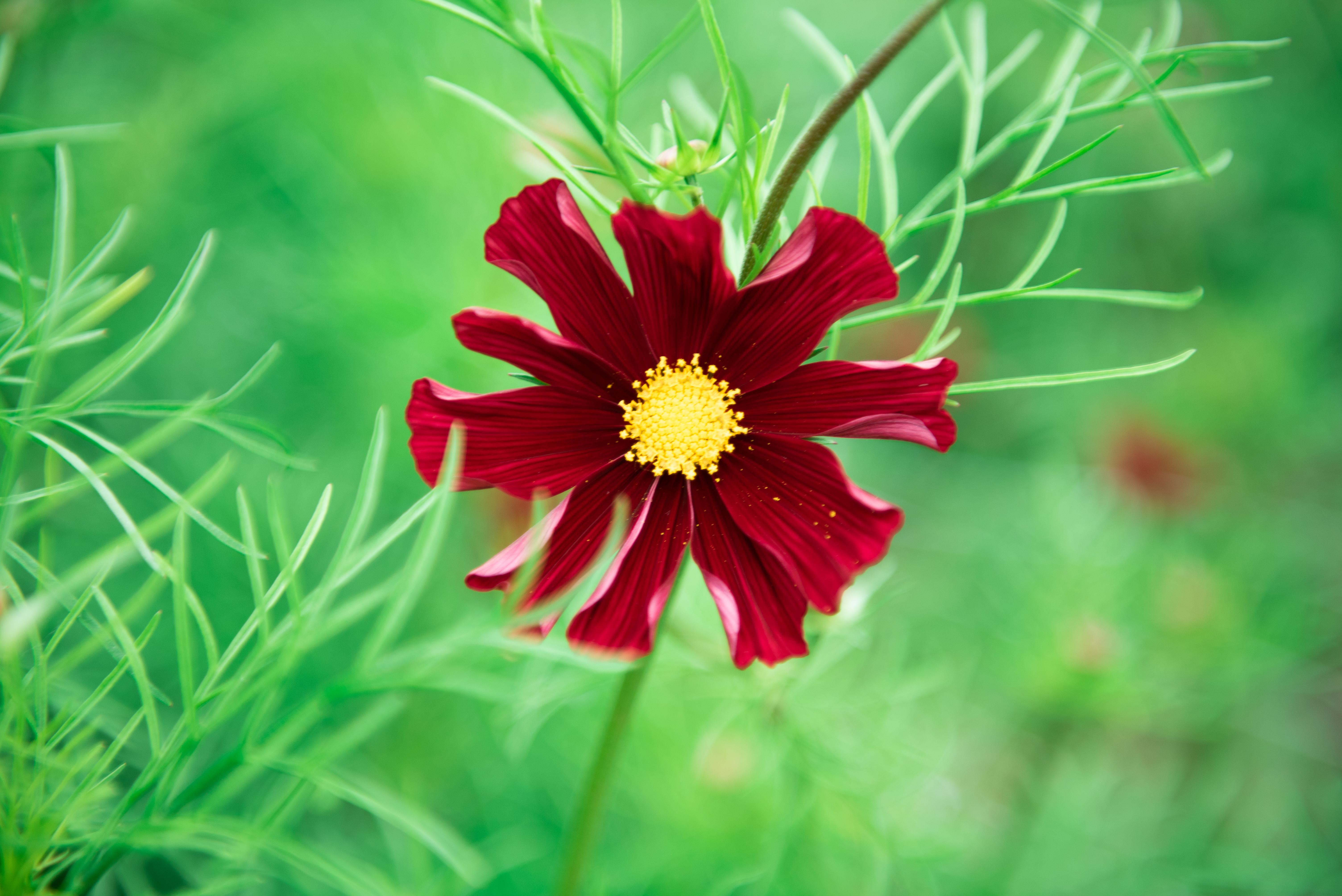 Foxglove Flower Farm-1-2