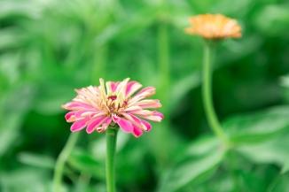 Foxglove Flower Farm-8